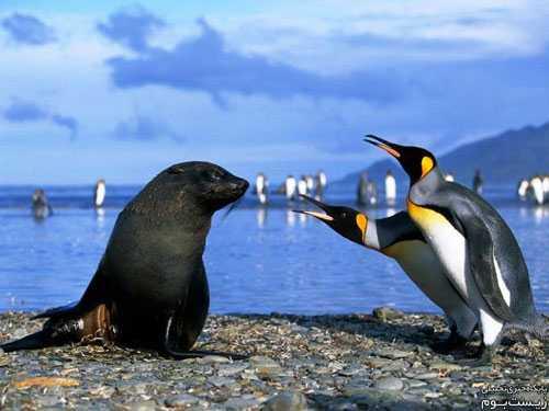 رابطه ی جنسی شیرهای دریایی با پنگوئن ها