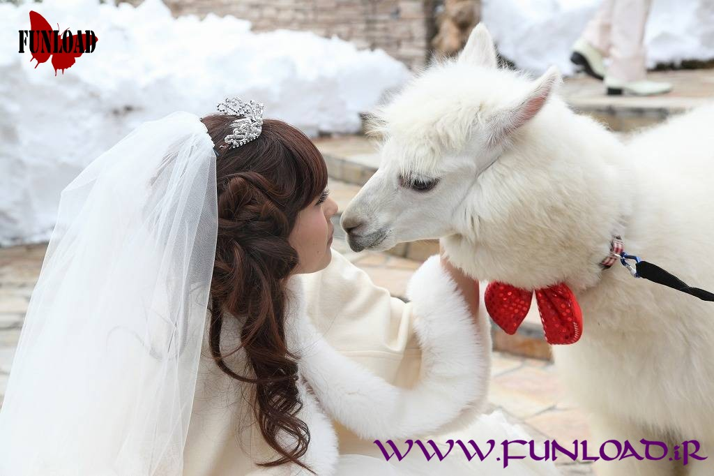 Alpaca camel Wedding Bridesmaid